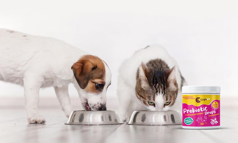 Пробиотики для питомцев малых пород